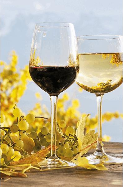 Vin Languedoc - Pays d'Oc - Coffret Offre Cépages