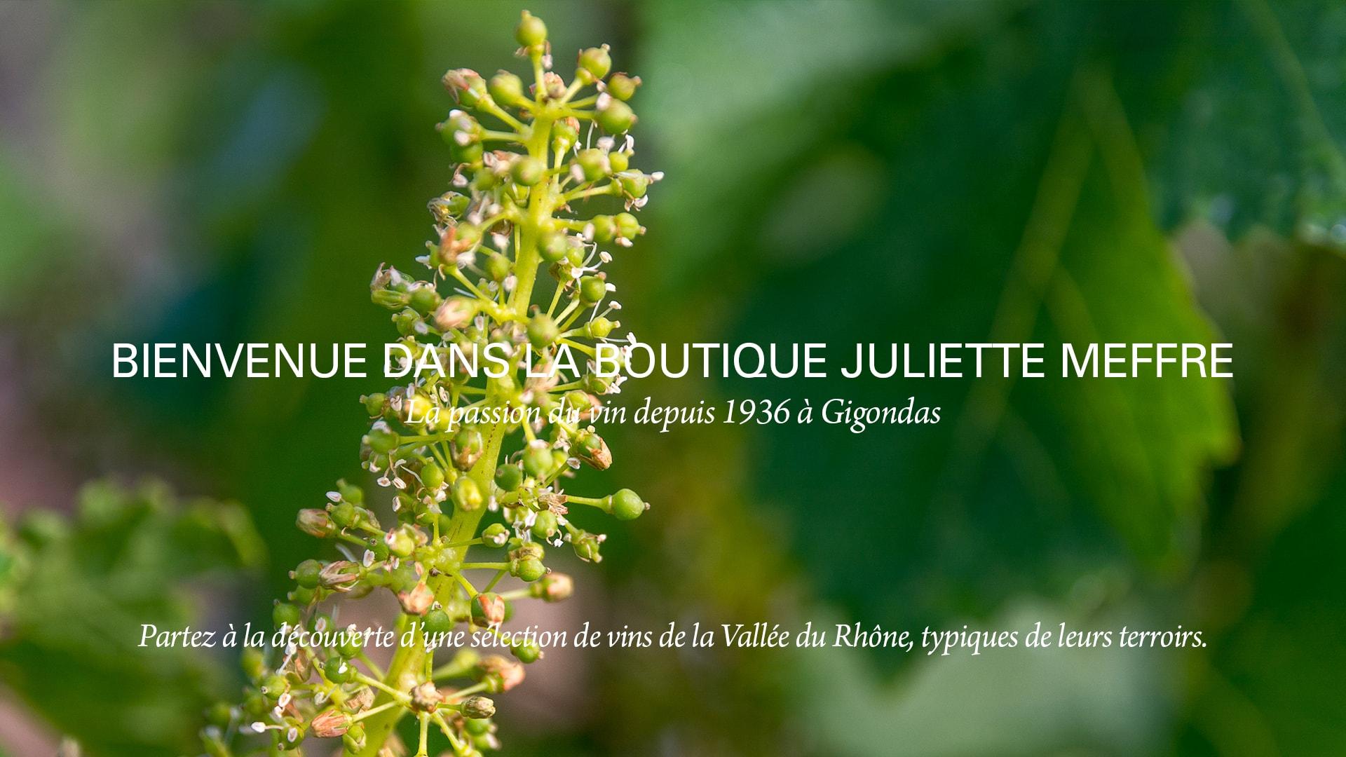 Slide Home été Juliette Meffre Côtes du Rhône