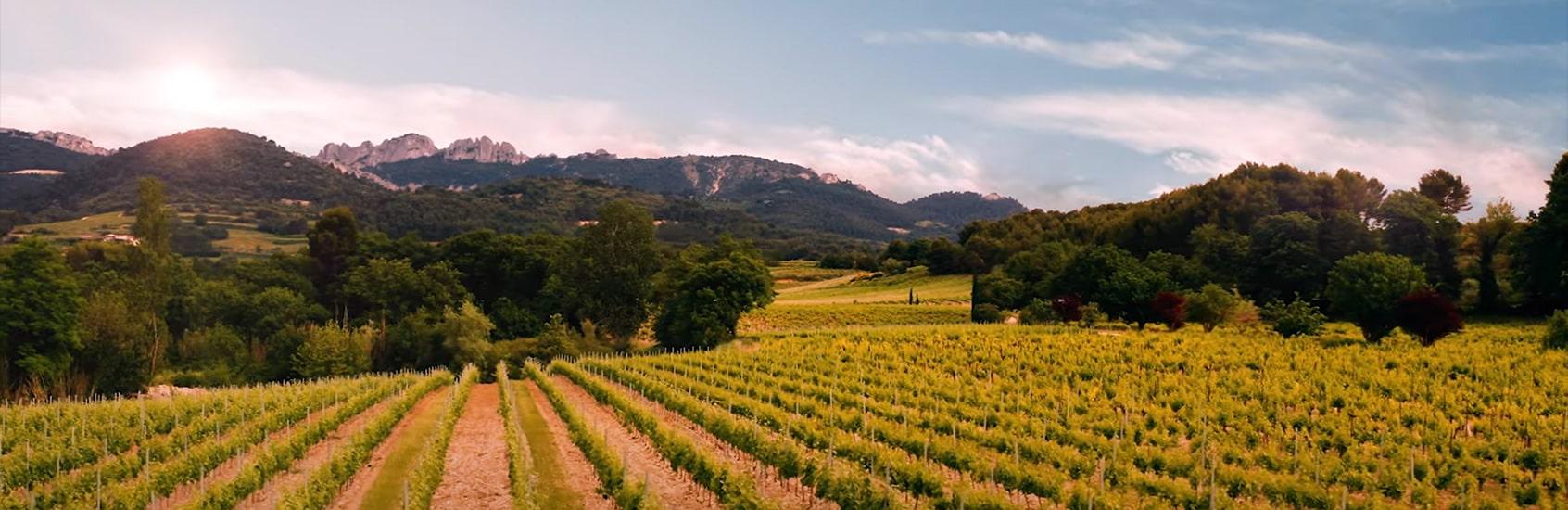 Vidéo Vins du Rhône